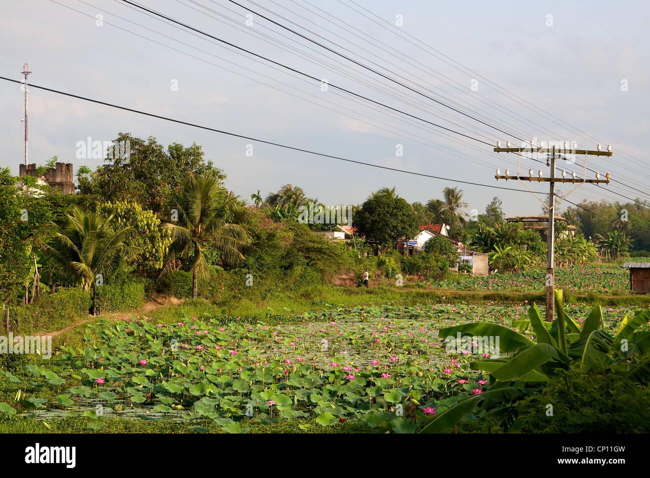 Wasser-Lilien in der Nähe von Nha Trang, Vietnam. Stockbild