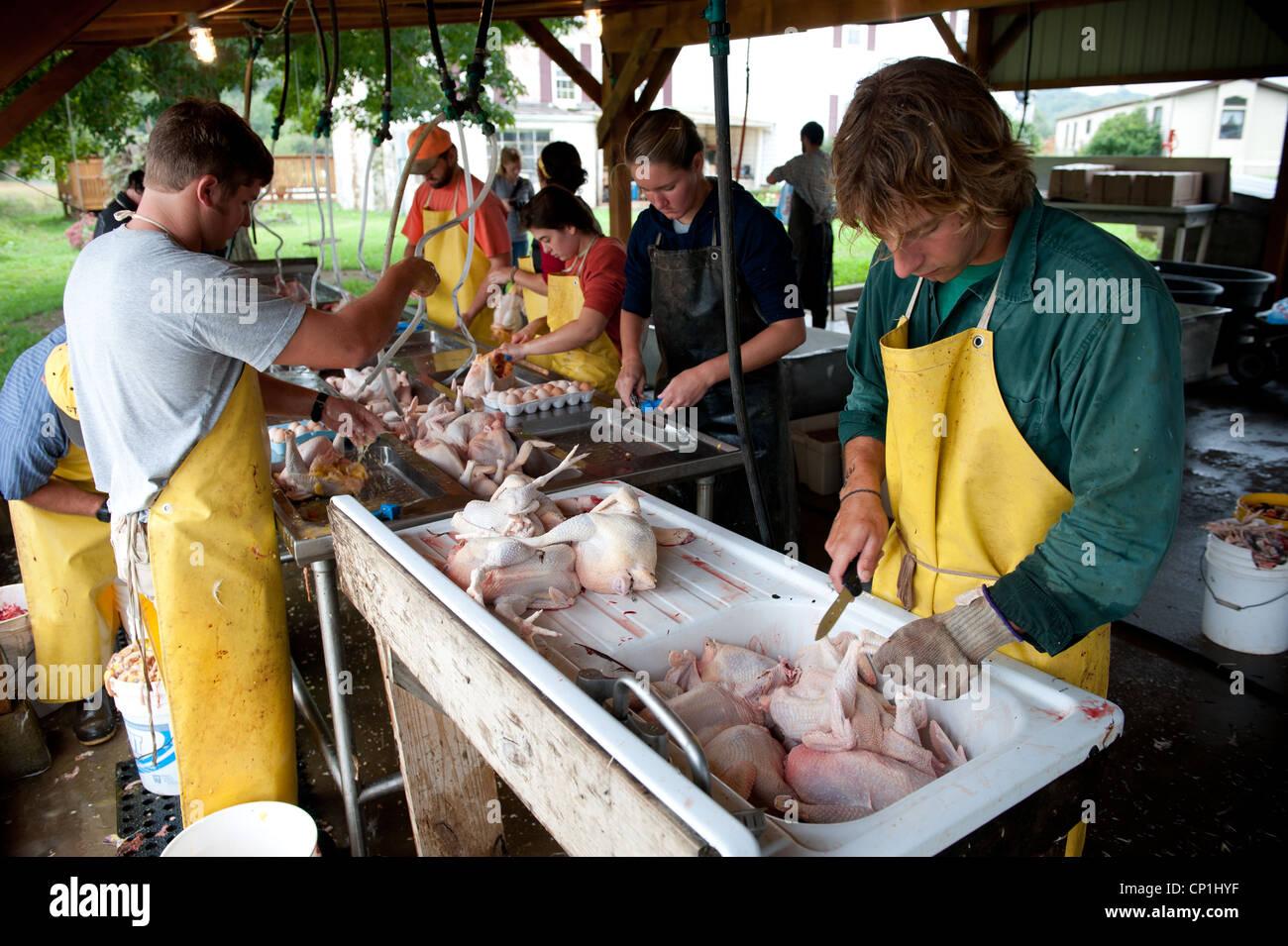 Reinigung und Vorbereitung der geschlachteten Hühner auf einer Geflügelfarm Gruppe Stockbild