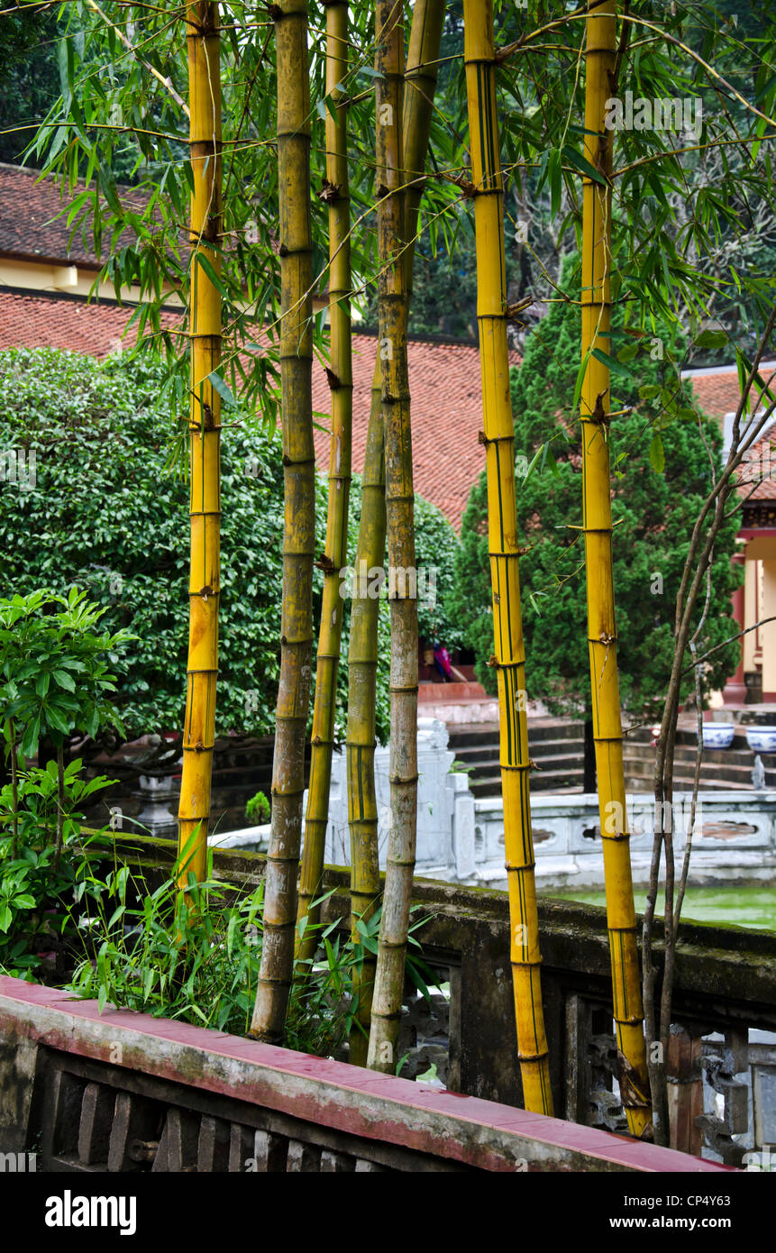 bambus im garten, bambus im garten pagode stockfoto, bild: 48052315 - alamy, Design ideen