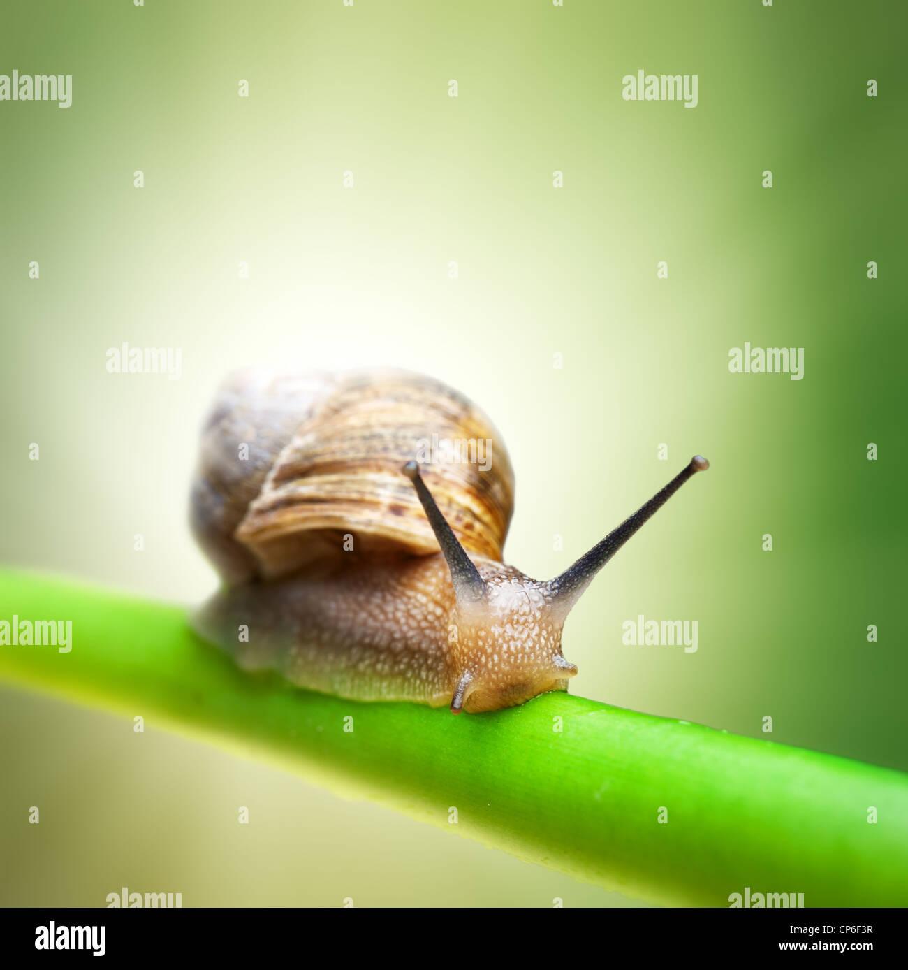 Schnecke kriecht auf grünem Stiel Stockbild