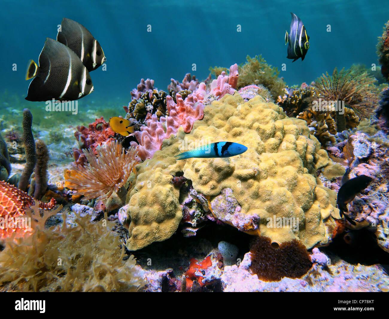 Unterwasser, farbenfrohe Unterwasserwelt mit Senf Hill Korallen und tropischen Fischen auf einem Meeresboden des Stockbild