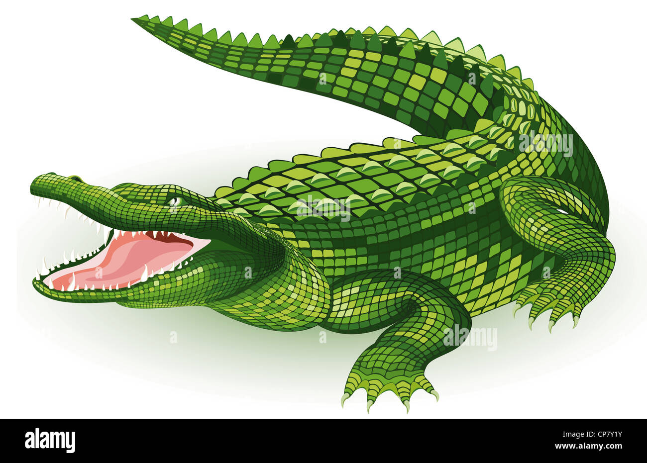 Fantastisch Anatomie Eines Alligators Ideen - Anatomie Von ...