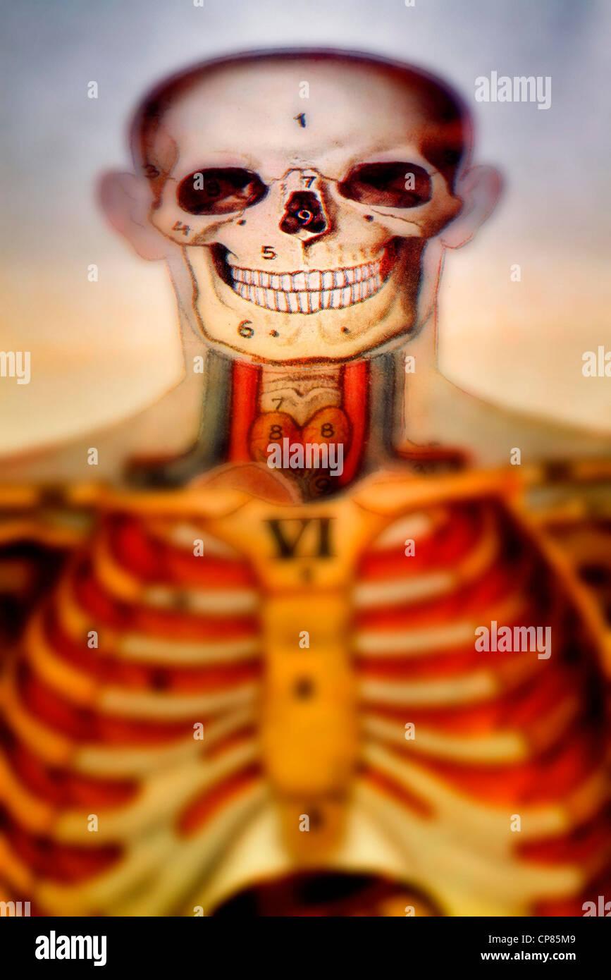 Anatomie, medizinische Illustration der Menschen, Aufklappbare ...