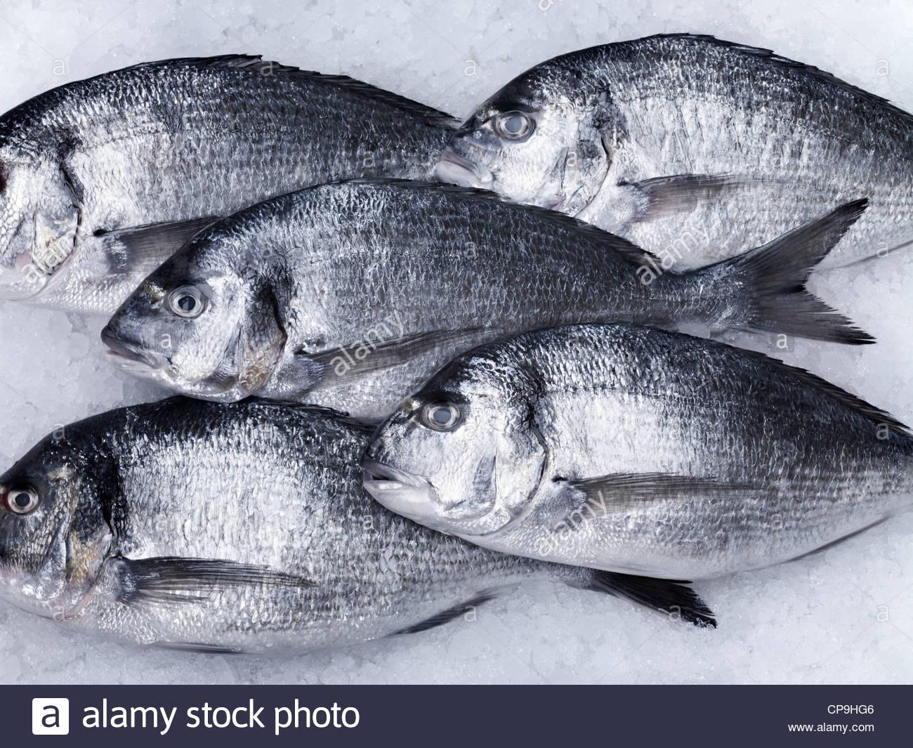 Tiere, Nahaufnahme, Farbbild, Kühlung, tot Fisch, Fisch, Fisch auf Eis, fünf Tiere, fünf Objekte, Stockbild