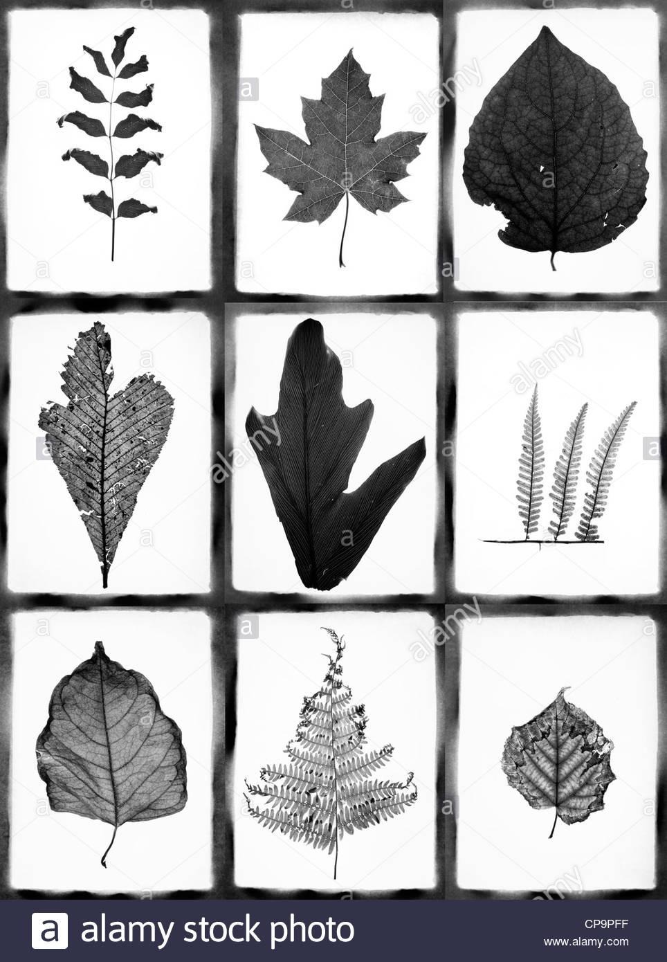 Collage mit verschiedenen Blättern Stockbild