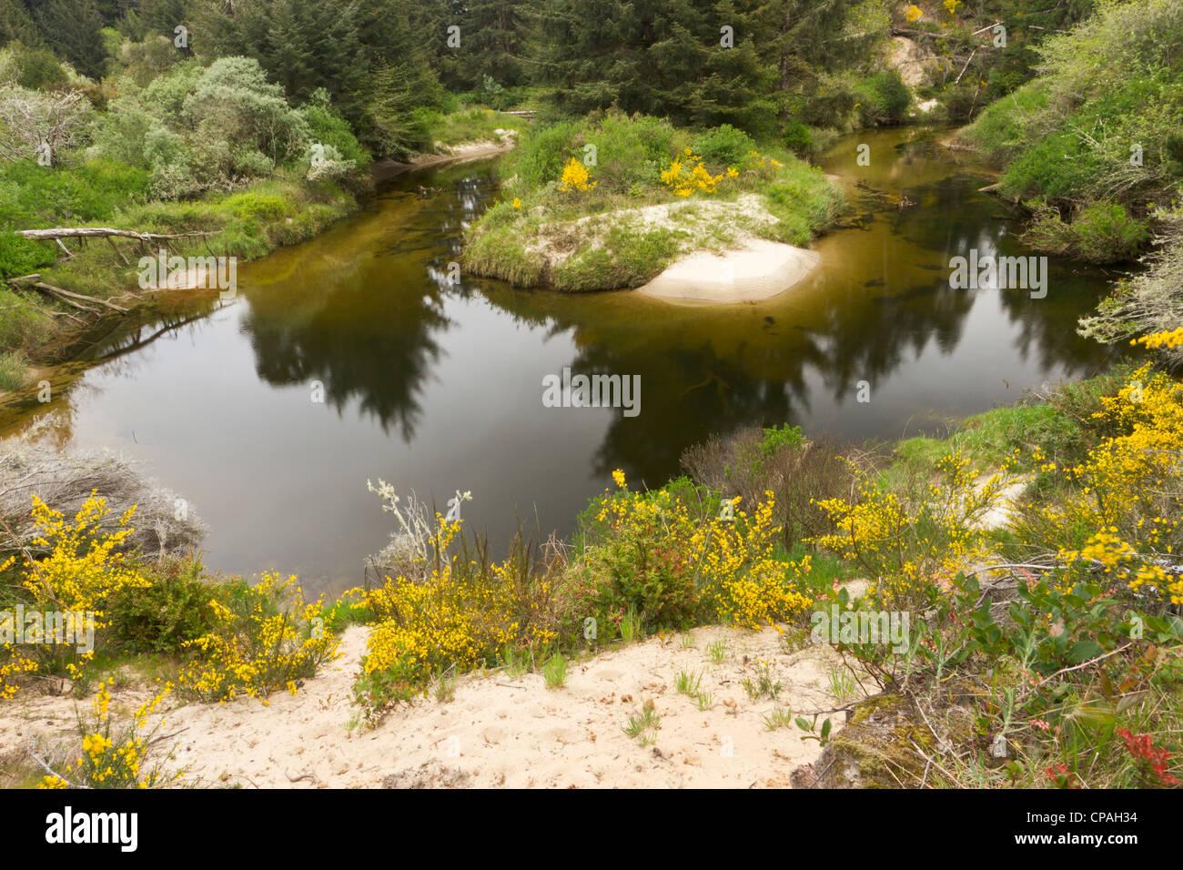 Ein Brackwasser Bach zieht sich durch die Dünen an der Küsten in Florence, Oregon Stockbild