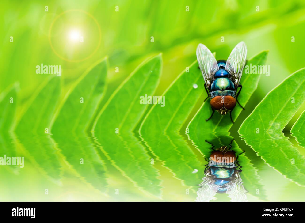 Fliegen Sie-Makro in der grünen Natur, in der Stadt oder auf Nahrung Stockbild