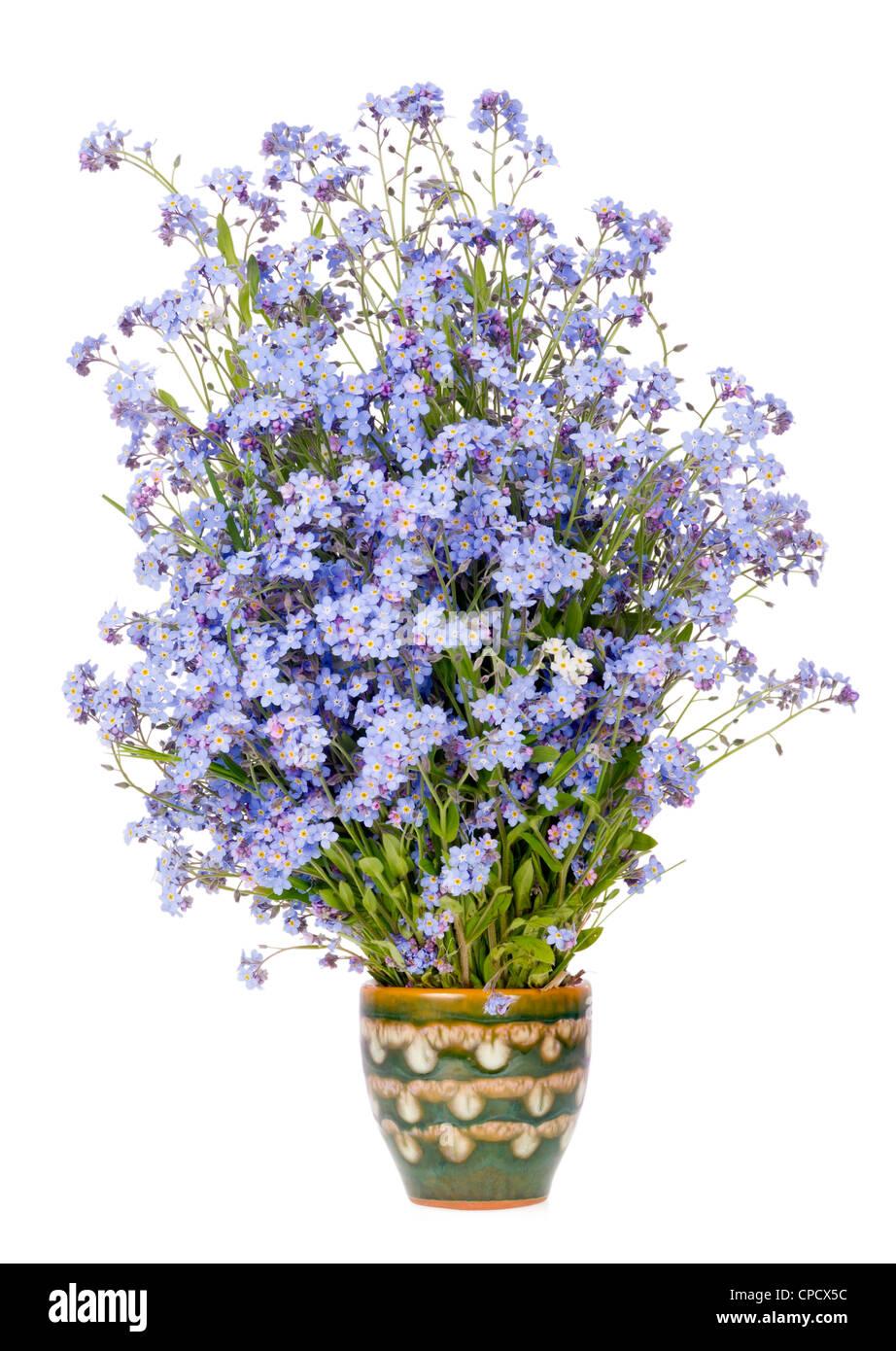 Sanfte seltene blaue kleine Blumen Frühlingsstrauß in Keramik Krug isoliert Stockbild