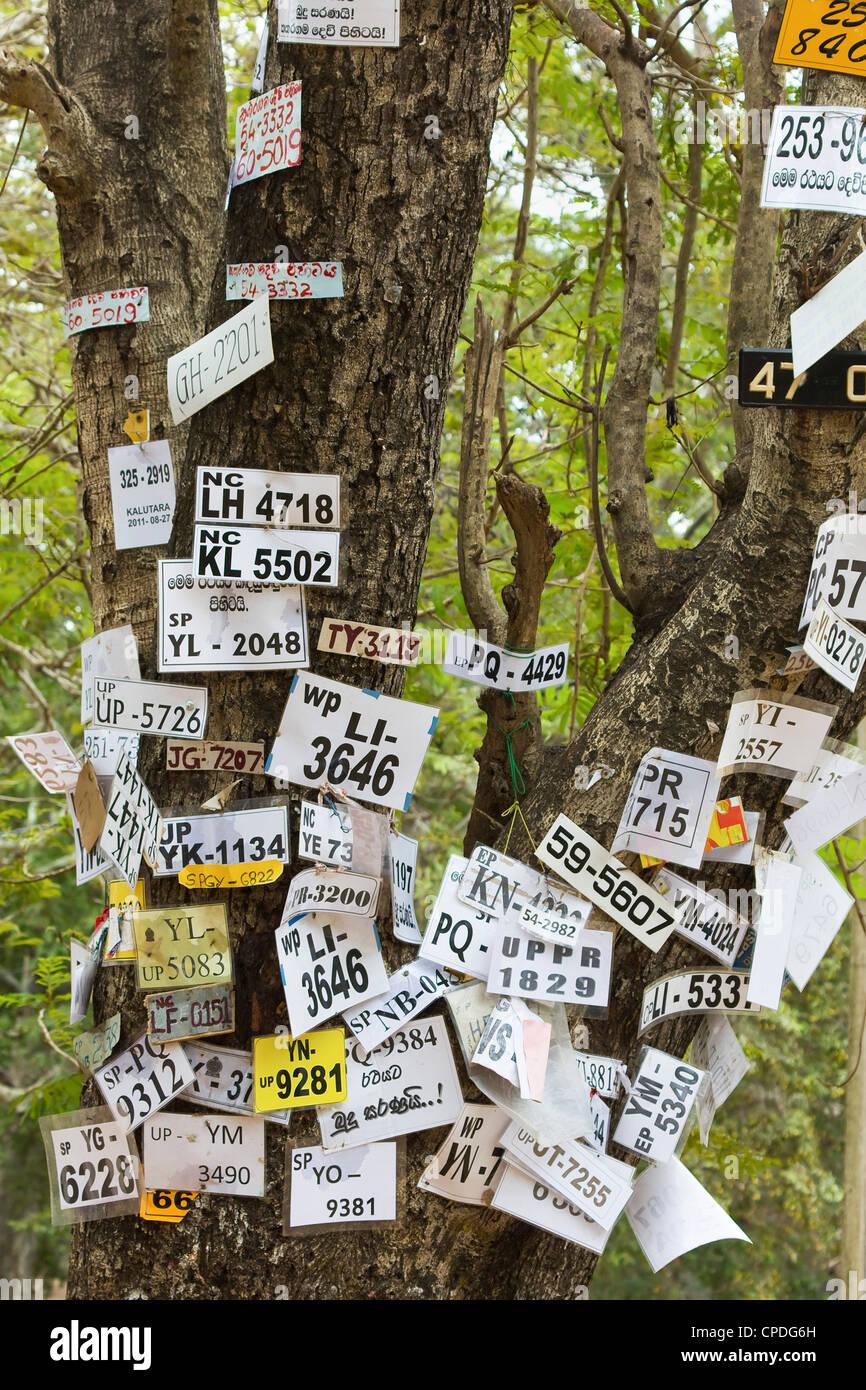 Fahrzeugnummern der Pilger angeheftet an einen Baum in dieser heiligen Stadt, beliebt bei allen Religionen, Kataragama, Stockbild