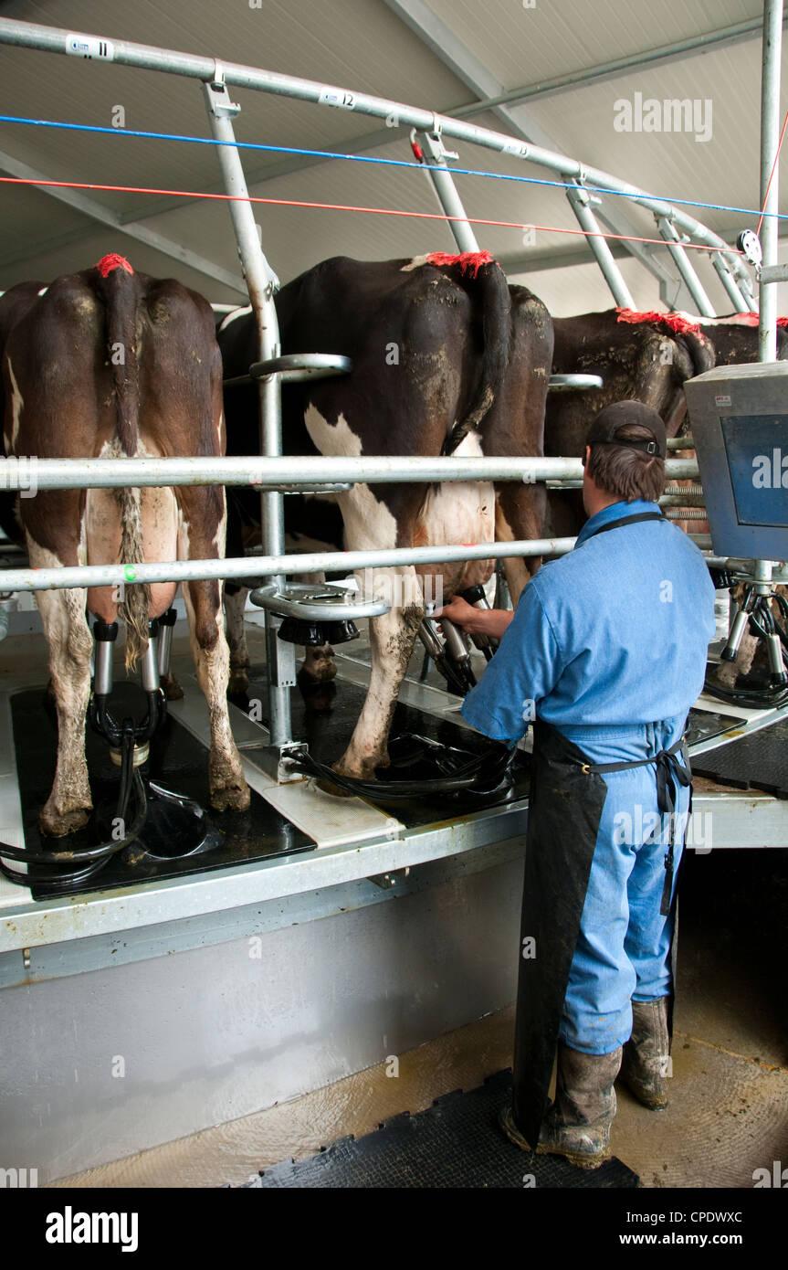 Neuseeland Nordinsel in der Nähe von Wellington, rotary Kuhmilch Melken auf Milchviehbetrieb in Wairarapa vergossen Stockfoto