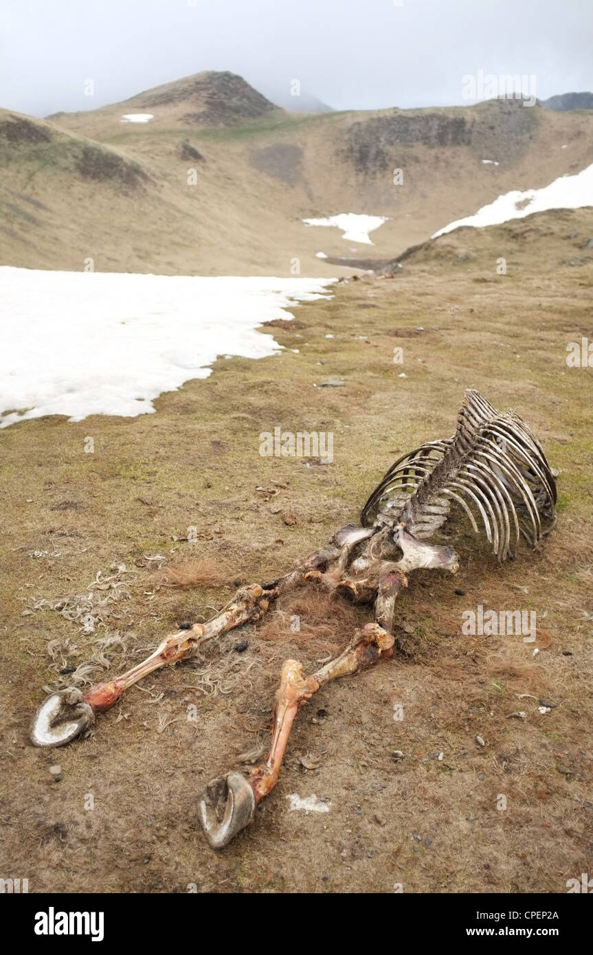 Knochen von einem toten Pferd links in der Nähe des Col de Pause, Ariege, Midi-Pyrenäen, Frankreich. Stockfoto