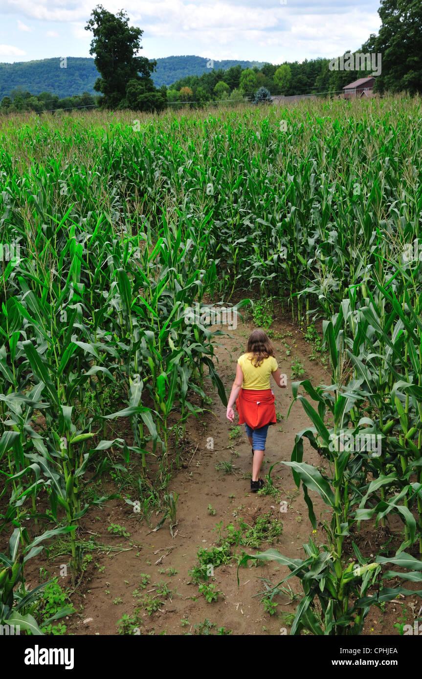 Teenager-Mädchen zu Fuß durch ein Maisfeld-Labyrinth bei Hathaway Farm, Rutland, Vermont Stockbild