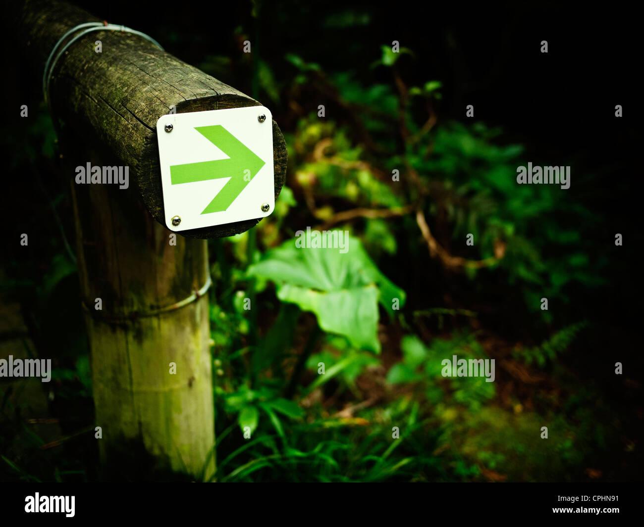 Grüner Pfeil im Waldweg Stockbild
