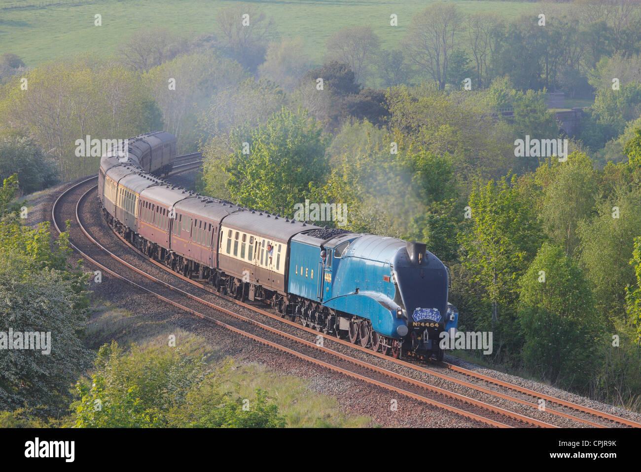 Die Kathedralen Explorer, LNER Class A4 4464 Rohrdommel Dampf Zug in der Nähe von Low Baron Holz Bauernhof Stockbild