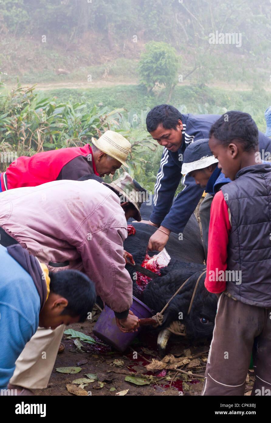 Tötung eines Stieres am Straßenrand, Andasibe, Madagaskar Stockbild