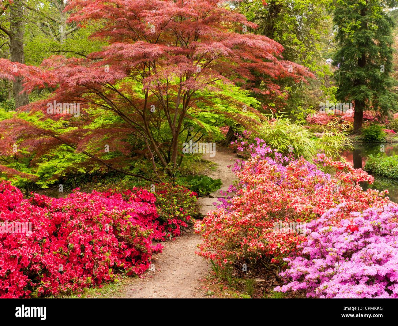 japanische acer azaleen und rhododendren in exbury gardens hampshire uk stockfoto bild. Black Bedroom Furniture Sets. Home Design Ideas