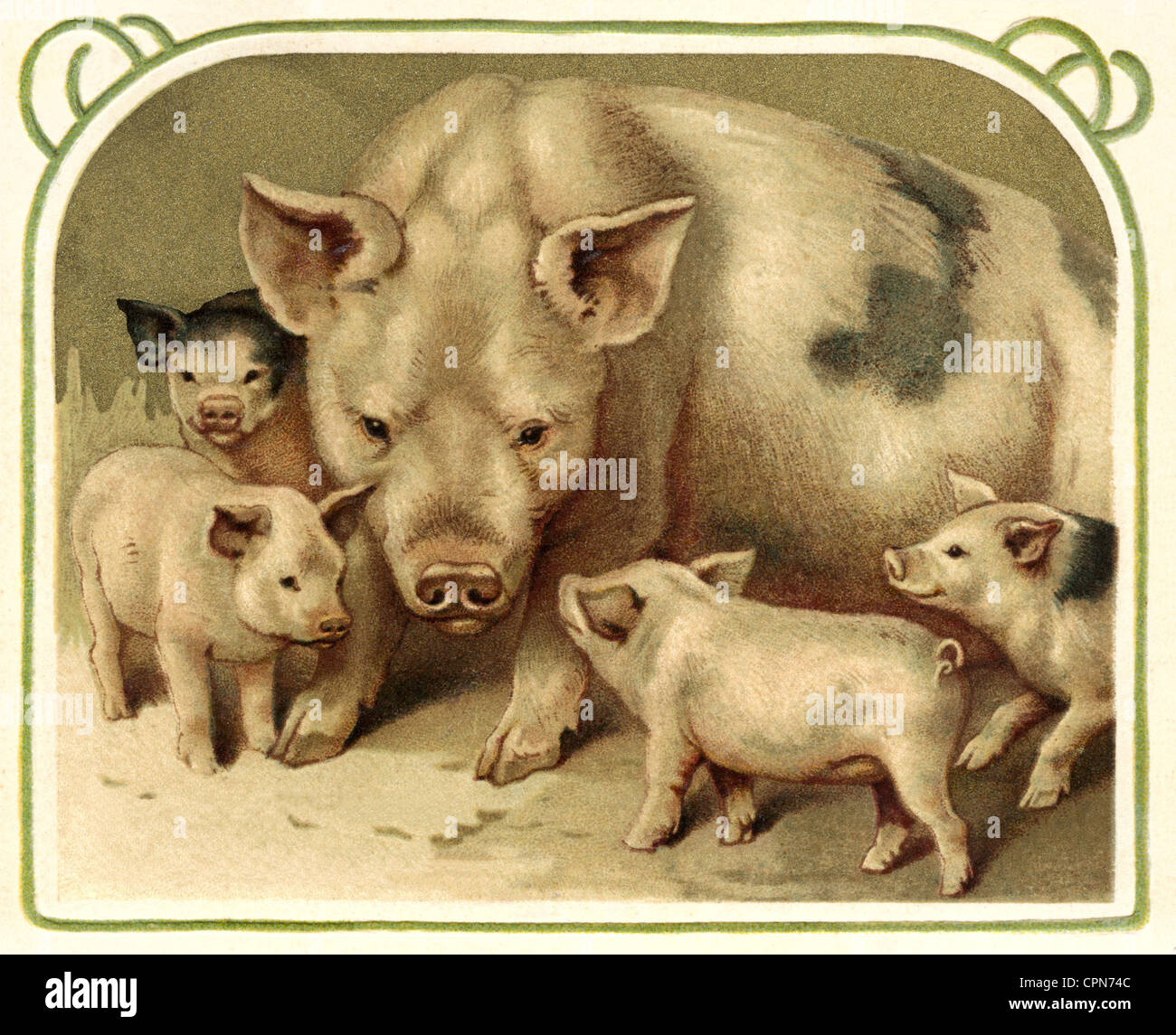 Großzügig Schwein Mund Anatomie Fotos - Menschliche Anatomie Bilder ...