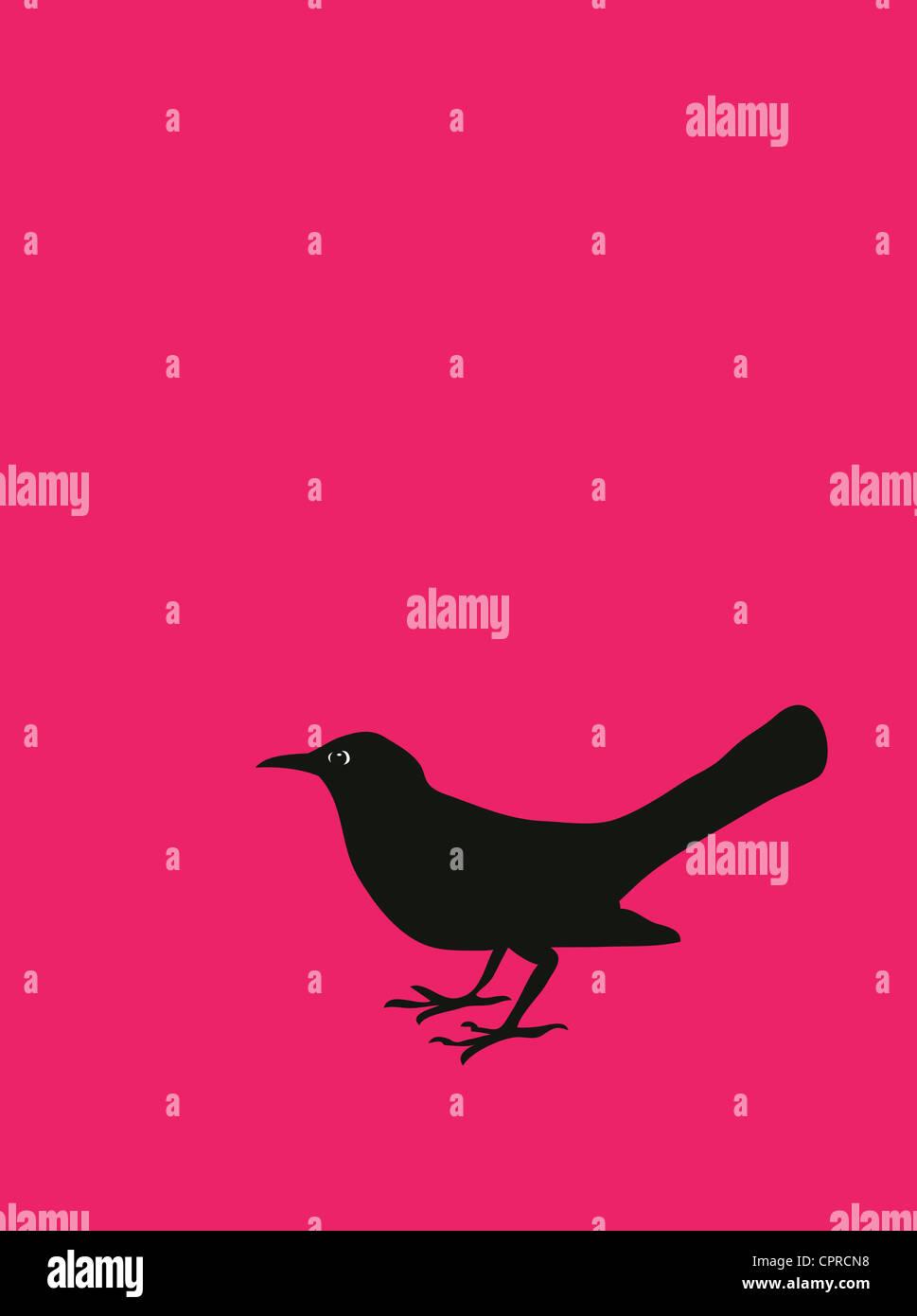 Eine Amsel auf einem rosa Hintergrund. Stockbild