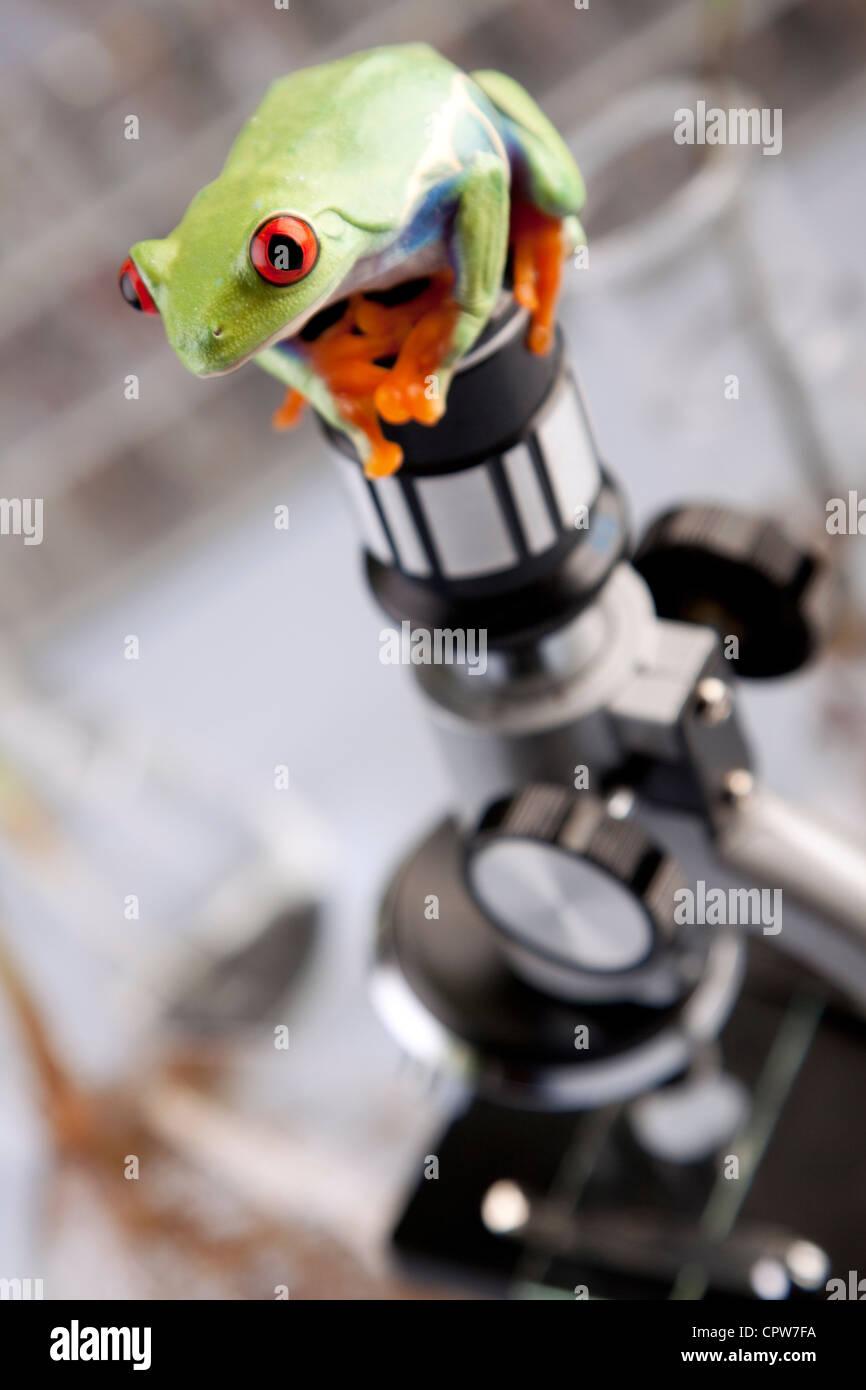 Pflanzen im Labor Stockbild