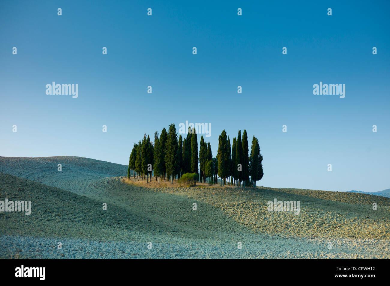 Hain von Zypressen in Landschaft von San Quirico D'Orcia in Val D'Orcia, Toskana, Italien Stockbild
