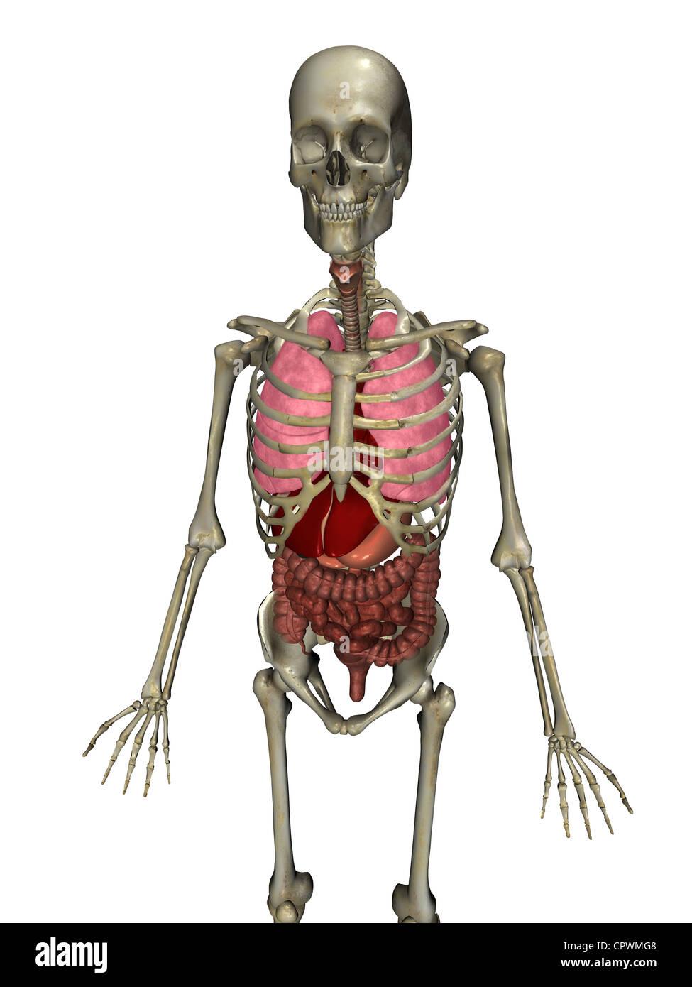 Gallbladder Liver Stockfotos & Gallbladder Liver Bilder - Seite 3 ...