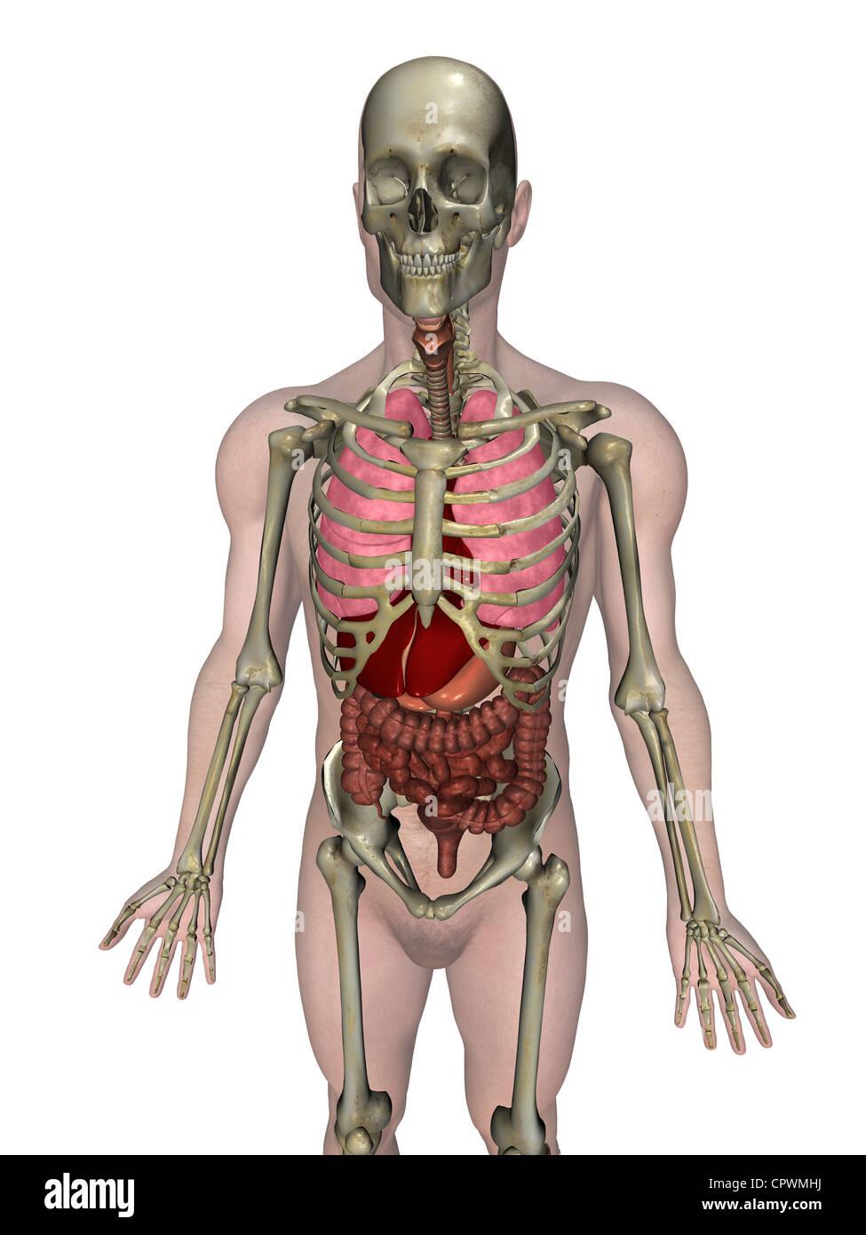 Wunderbar Wo Ist Der Bauchspeicheldrüse Auf Den Menschlichen Körper ...
