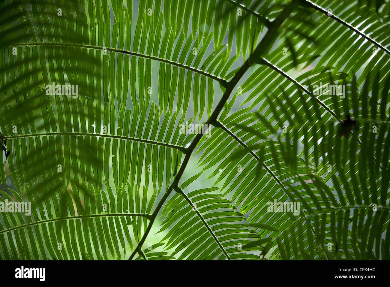 die Blätter in den Regenwald bei Casaroro Wasserfall, Nr. Dumaguete, Negros, Philippinen Stockbild