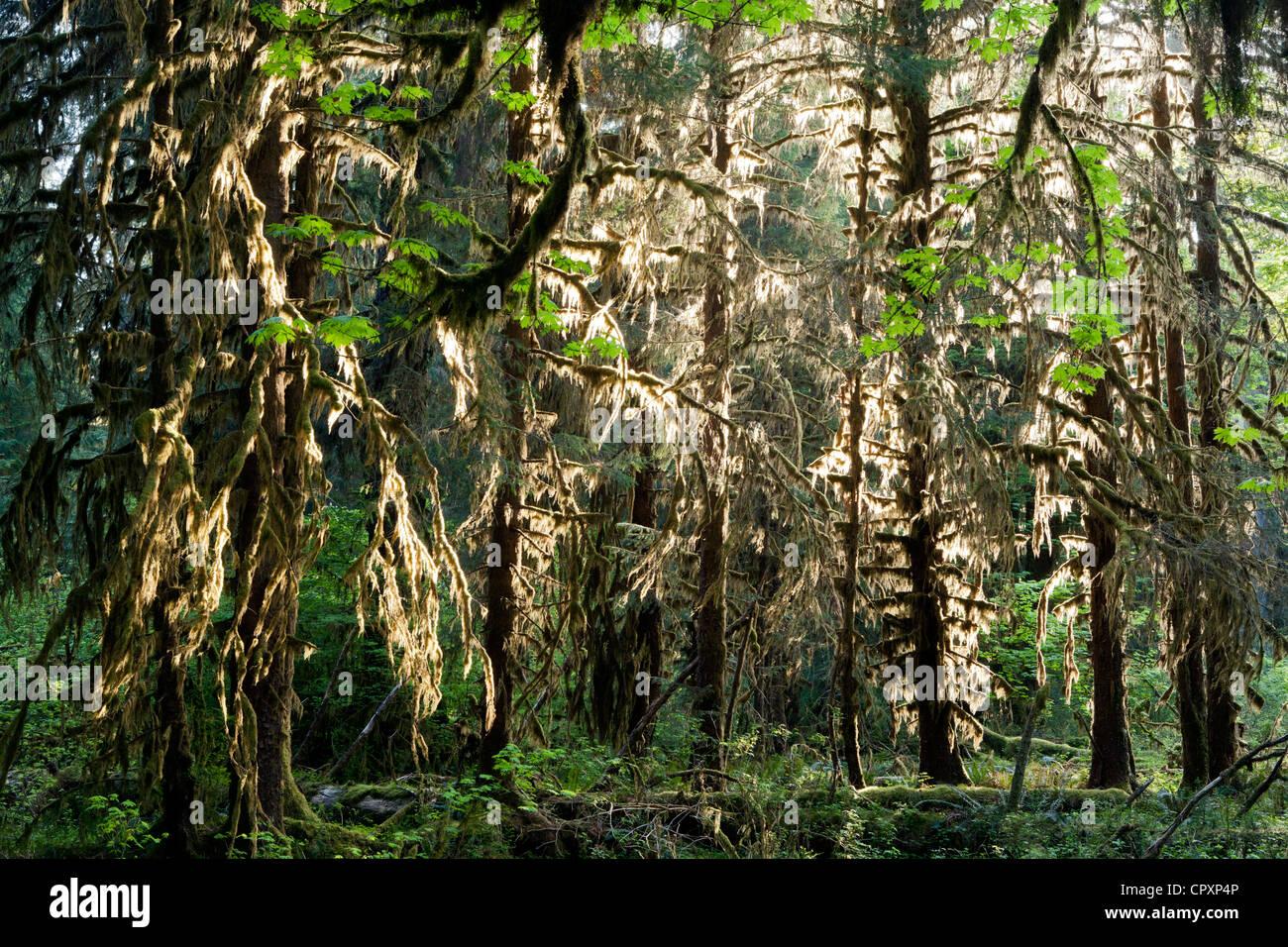 Hoh rainforest olympic national park in der n he von for Wildparks in der nahe