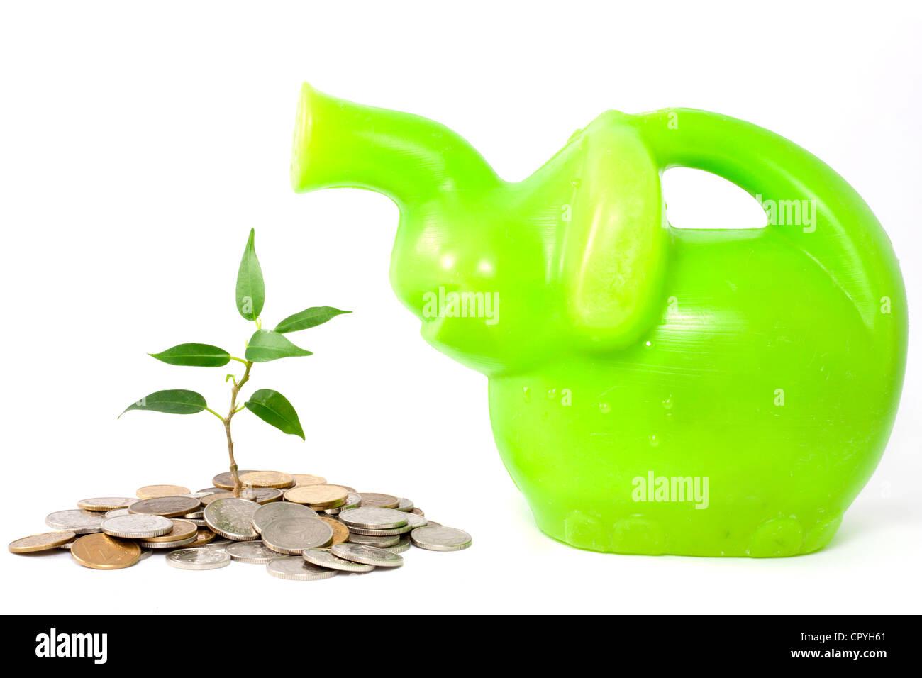Grüne Pflanze auf weißem Hintergrund Geschäft Metapher des Sparens des Geldes in der Bank und schützen Stockbild