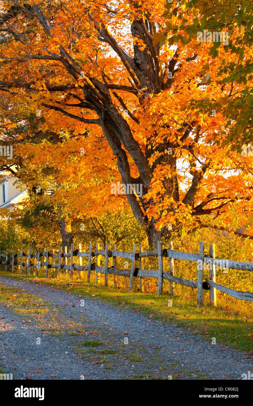 Bäume, Kies Weg und Zaun im Herbst, Lawrenceville, Quebec, Kanada Stockfoto
