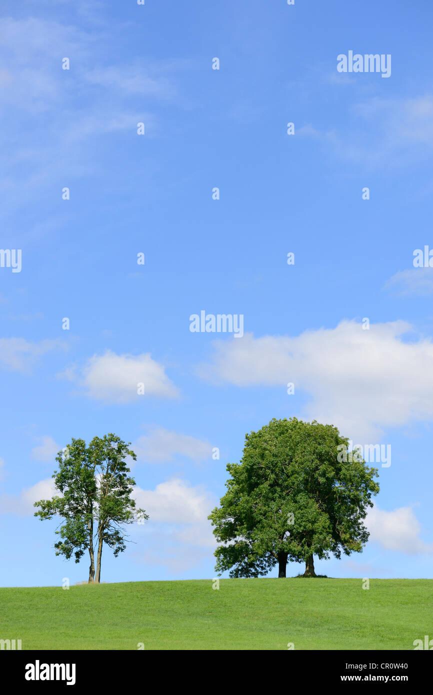 Ein Baum Hügel gegossen