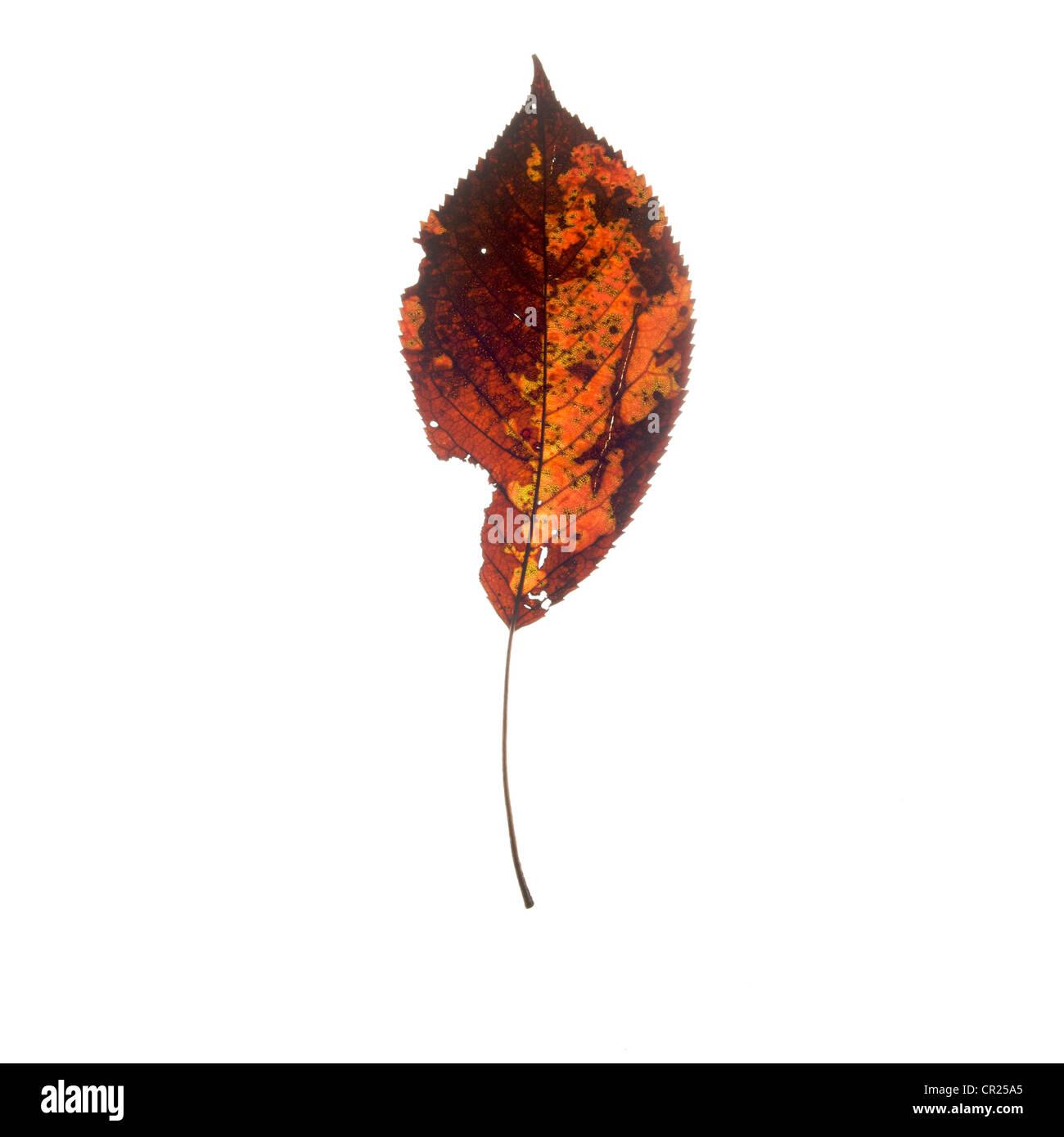 Blatt in herbstlichen Farben Stockbild