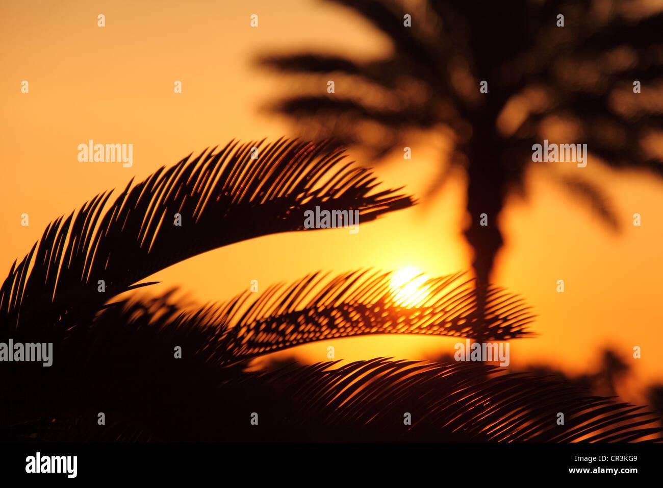 Palmen im Sonnenuntergang Stockbild