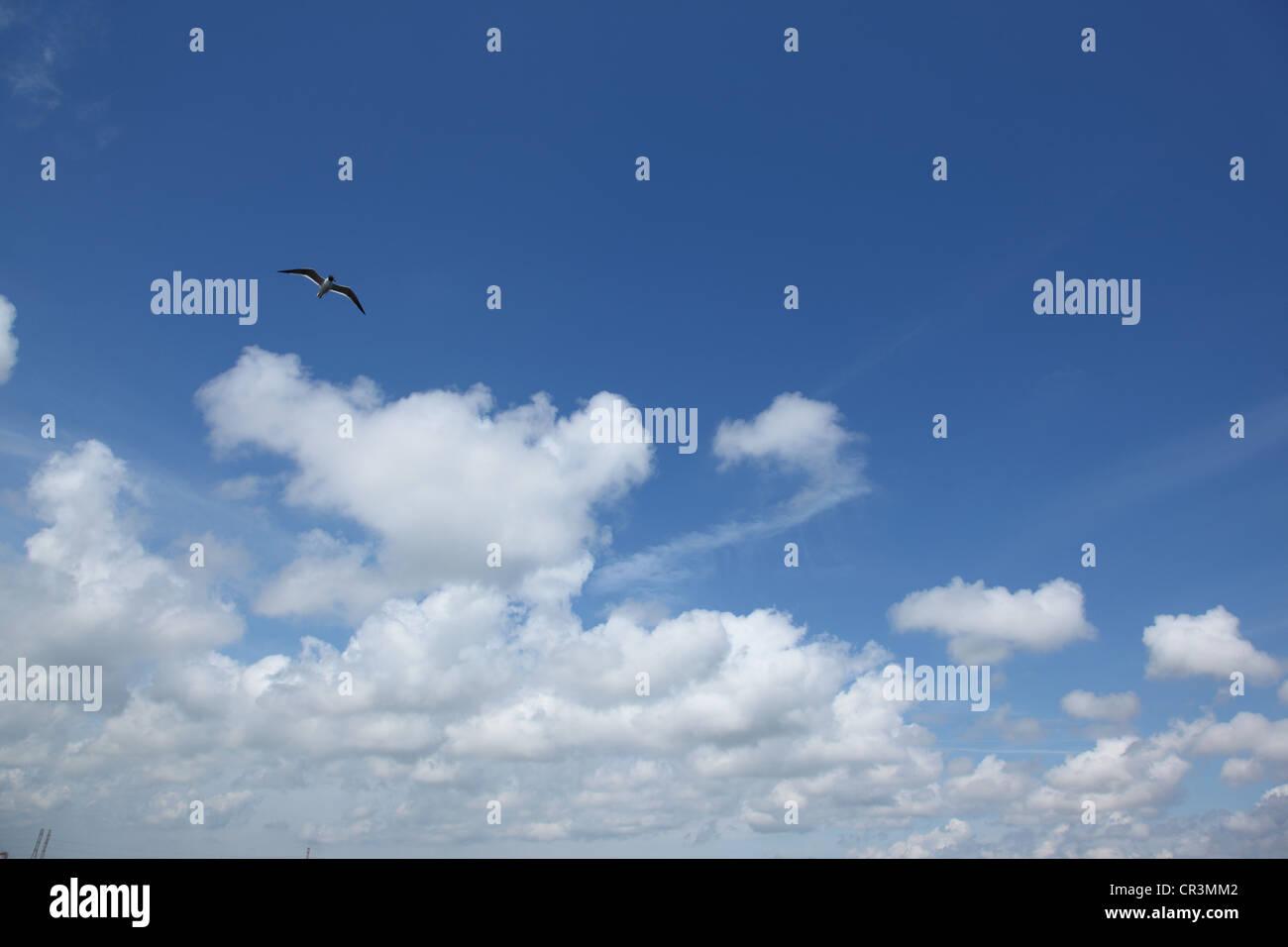 Möwen fliegen in den Himmel mit Wolken Stockbild
