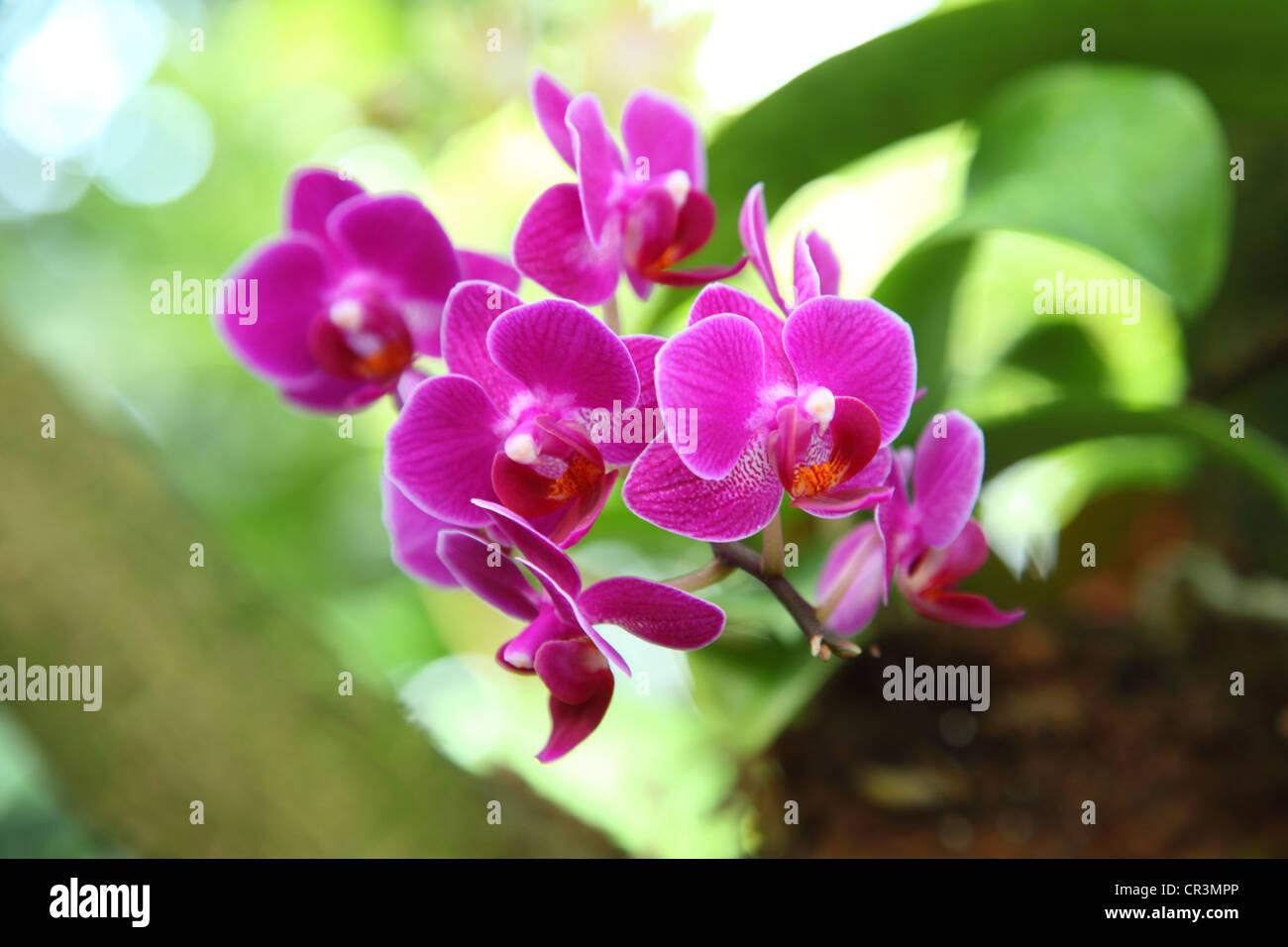 Hell rosa Orchideen Stockbild