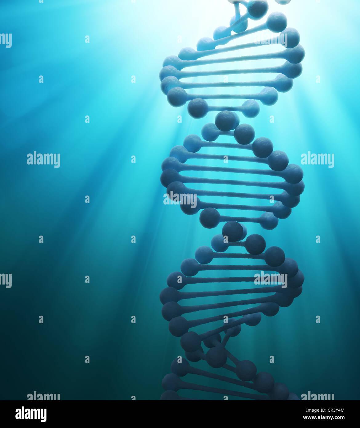 Vereinfachte DNA-Doppelhelix Strang Modell Stockfoto