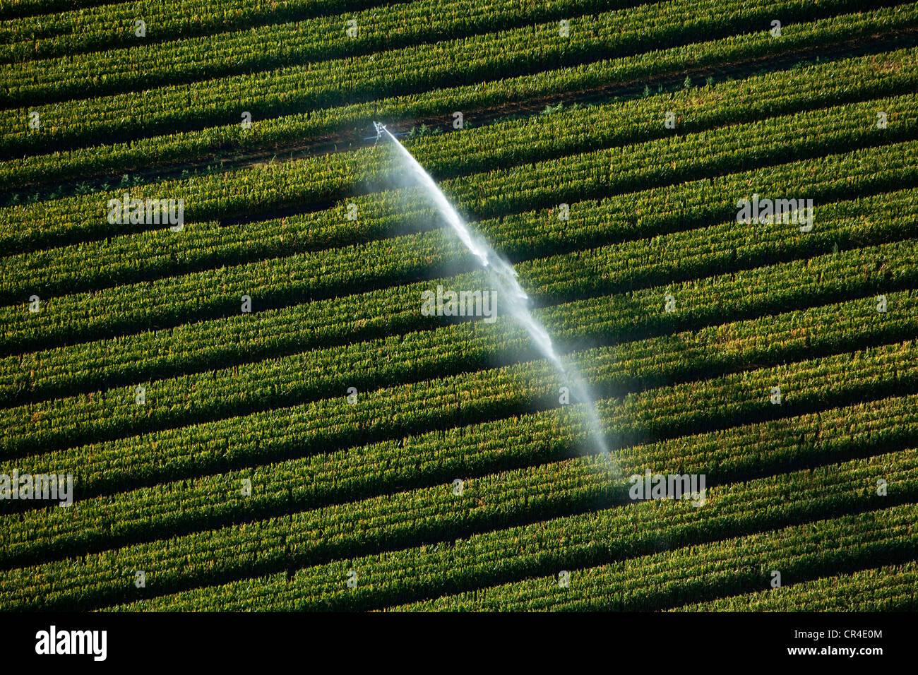 Frankreich, Var, Rian, Beregnung in einem Maisfeld (Luftbild) Stockbild