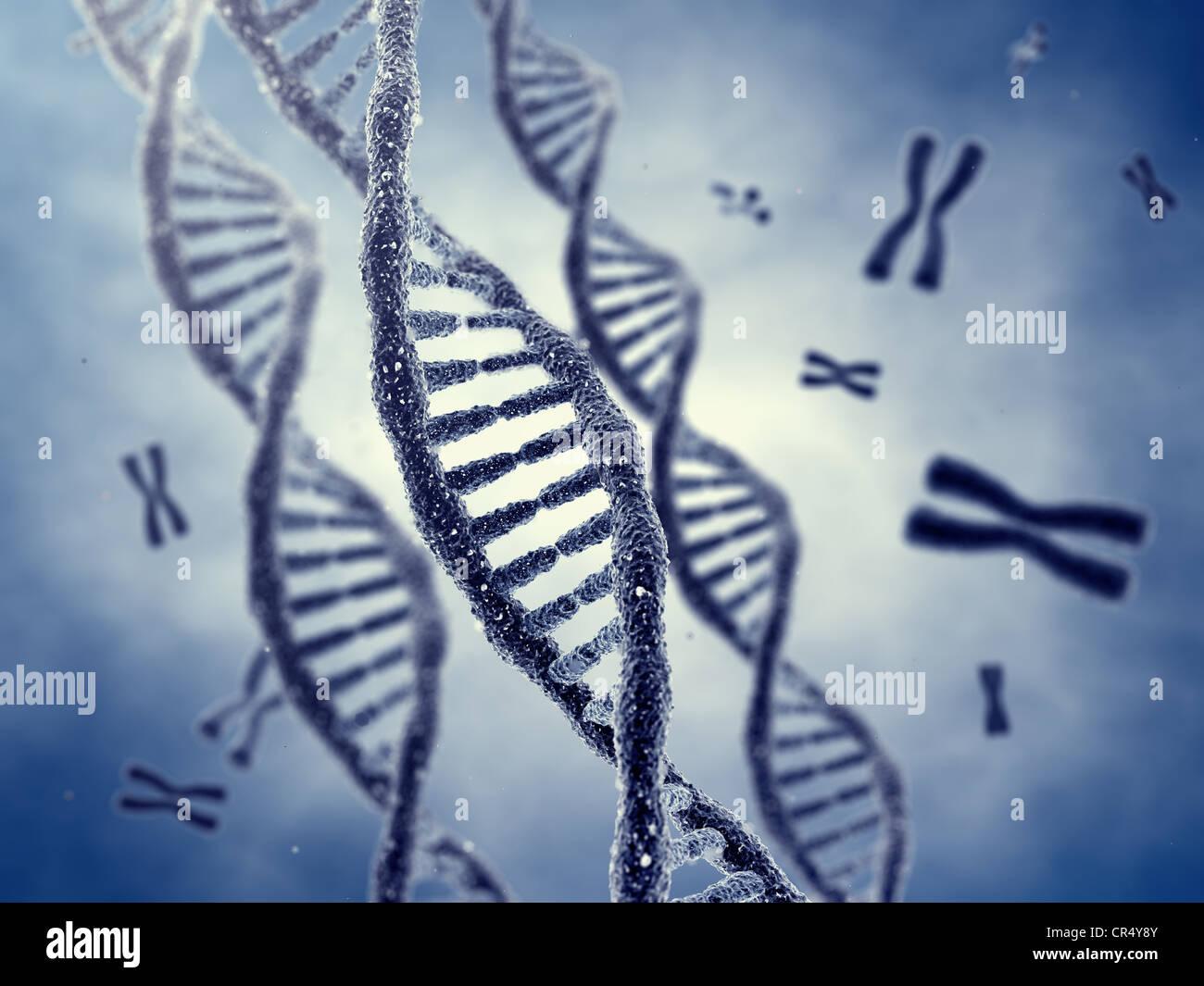 DNA-Doppelhelix Moleküle und Chromosomen Stockbild
