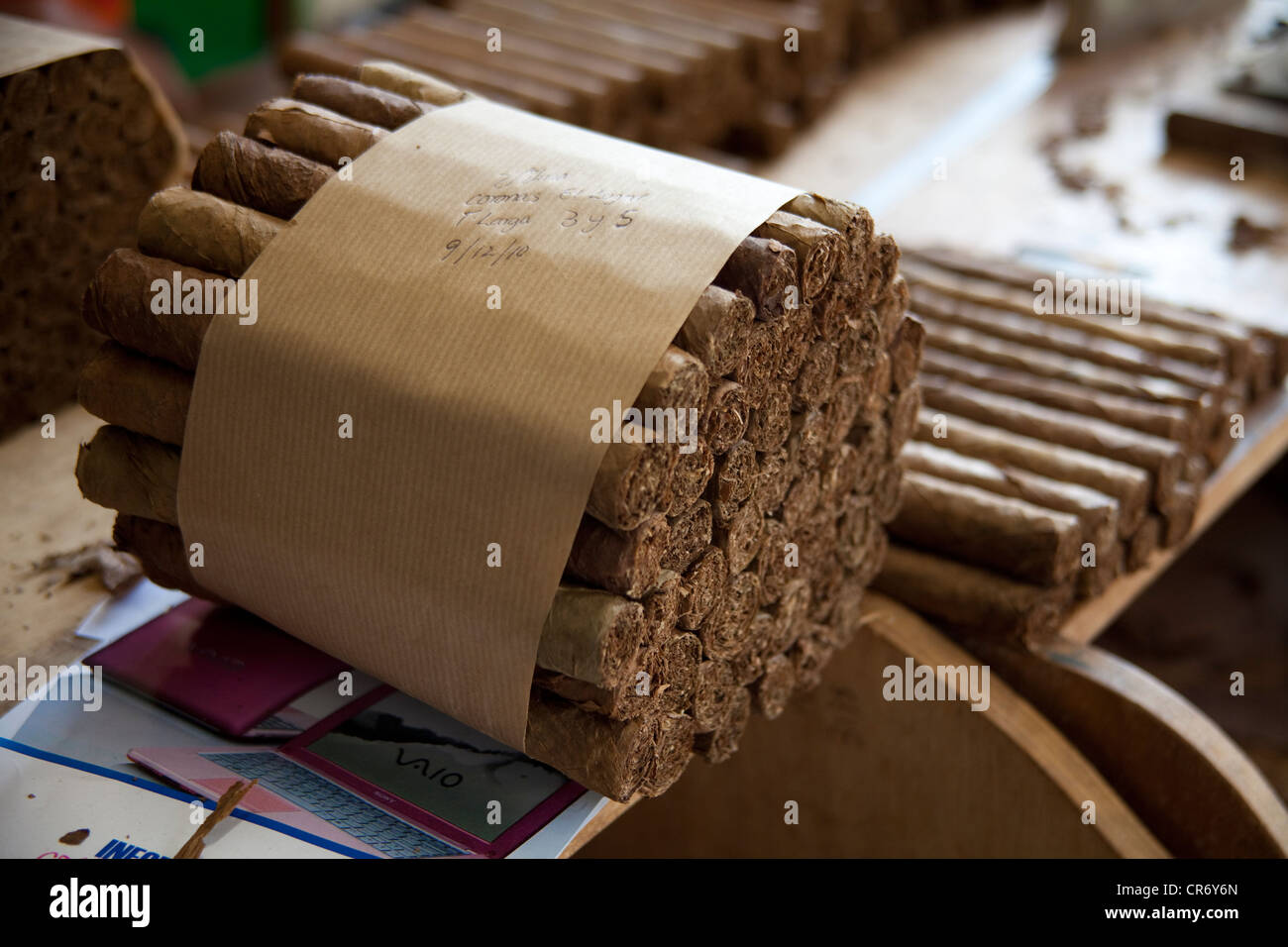 Gebündelte Zigarren in der El Sitio Zigarrenfabrik, Brena Alta, La Palma, Spanien, Kanarische Inseln, Europa, Stockbild