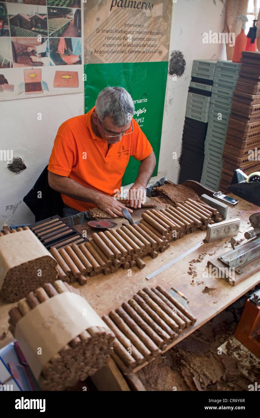 Mann, die Herstellung von Zigarren, El Sitio Zigarrenfabrik, Brena Alta, La Palma, Spanien, Kanarische Inseln, Europa, Stockbild