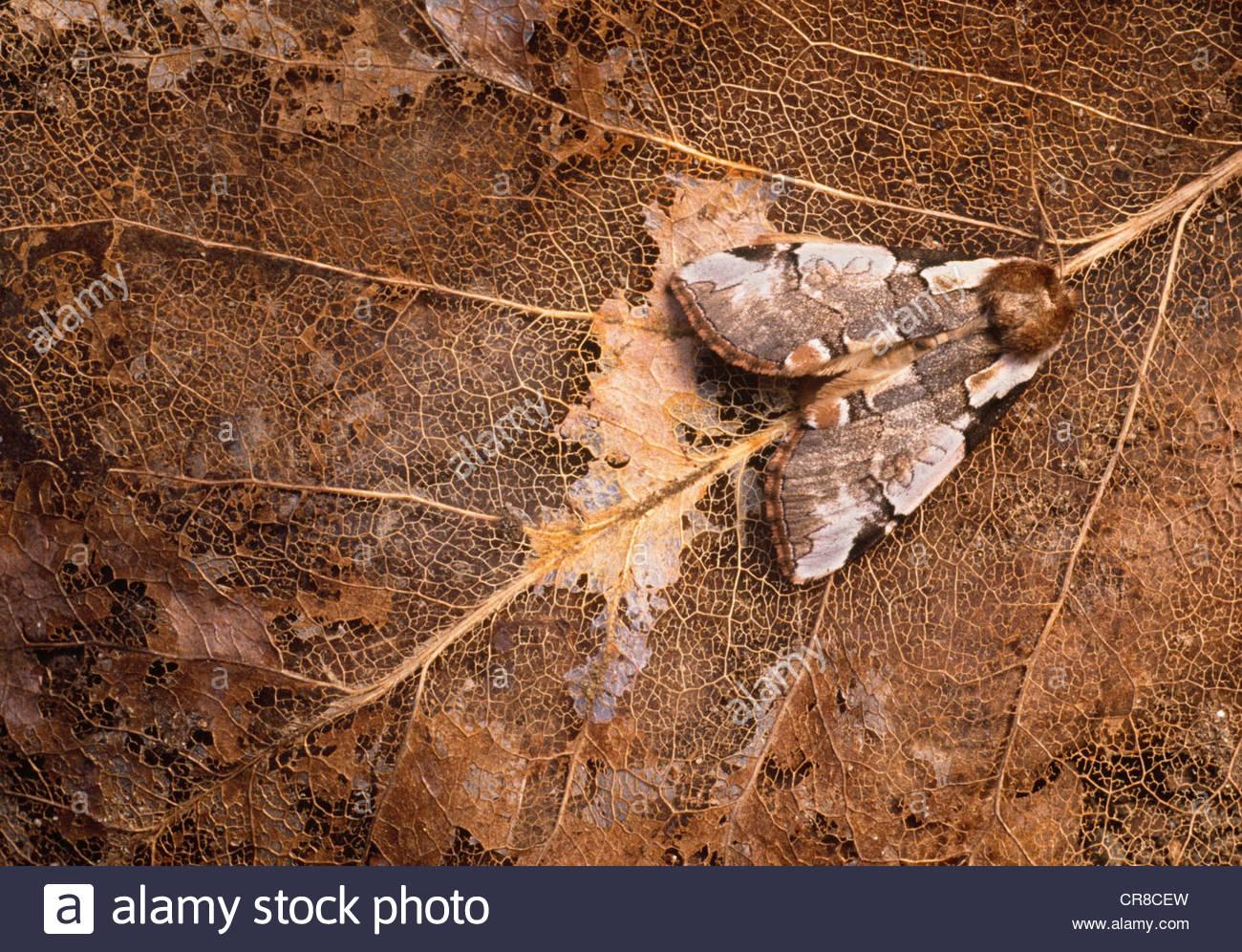 Motte, Washington Stockbild