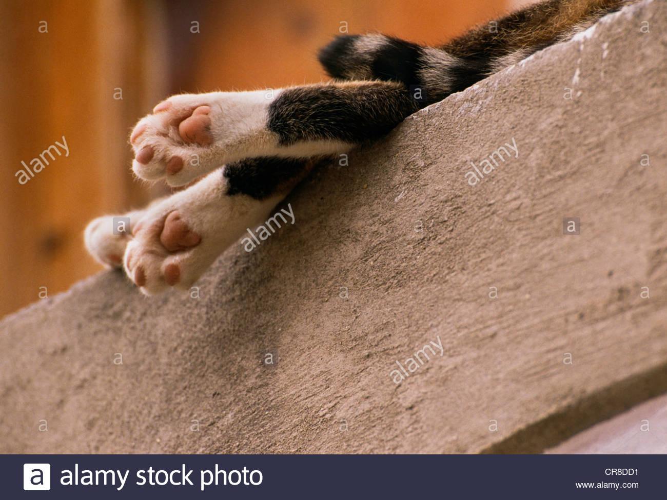 Baumelnden Beinen und das Endstück schlafende Katze auf Sims, Italien Stockbild