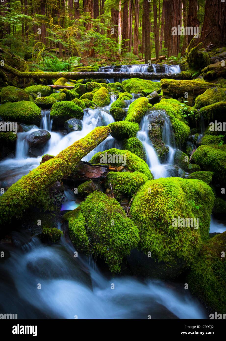 Kleiner Bach in der Nähe von Sol Duc fällt in Olympic Nationalpark, Washington Stockbild