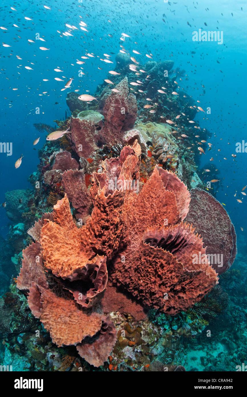Sponge School Stockfotos & Sponge School Bilder - Alamy