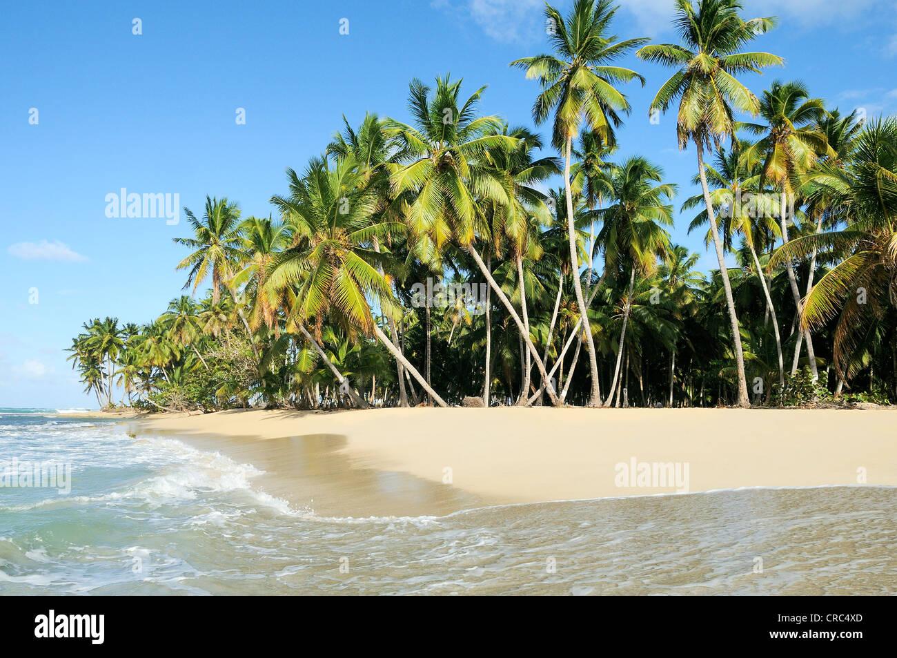 Kokospalmen, angeordnet auf einer zufälligen Reihenfolge gegen den blauen Himmel Stockbild