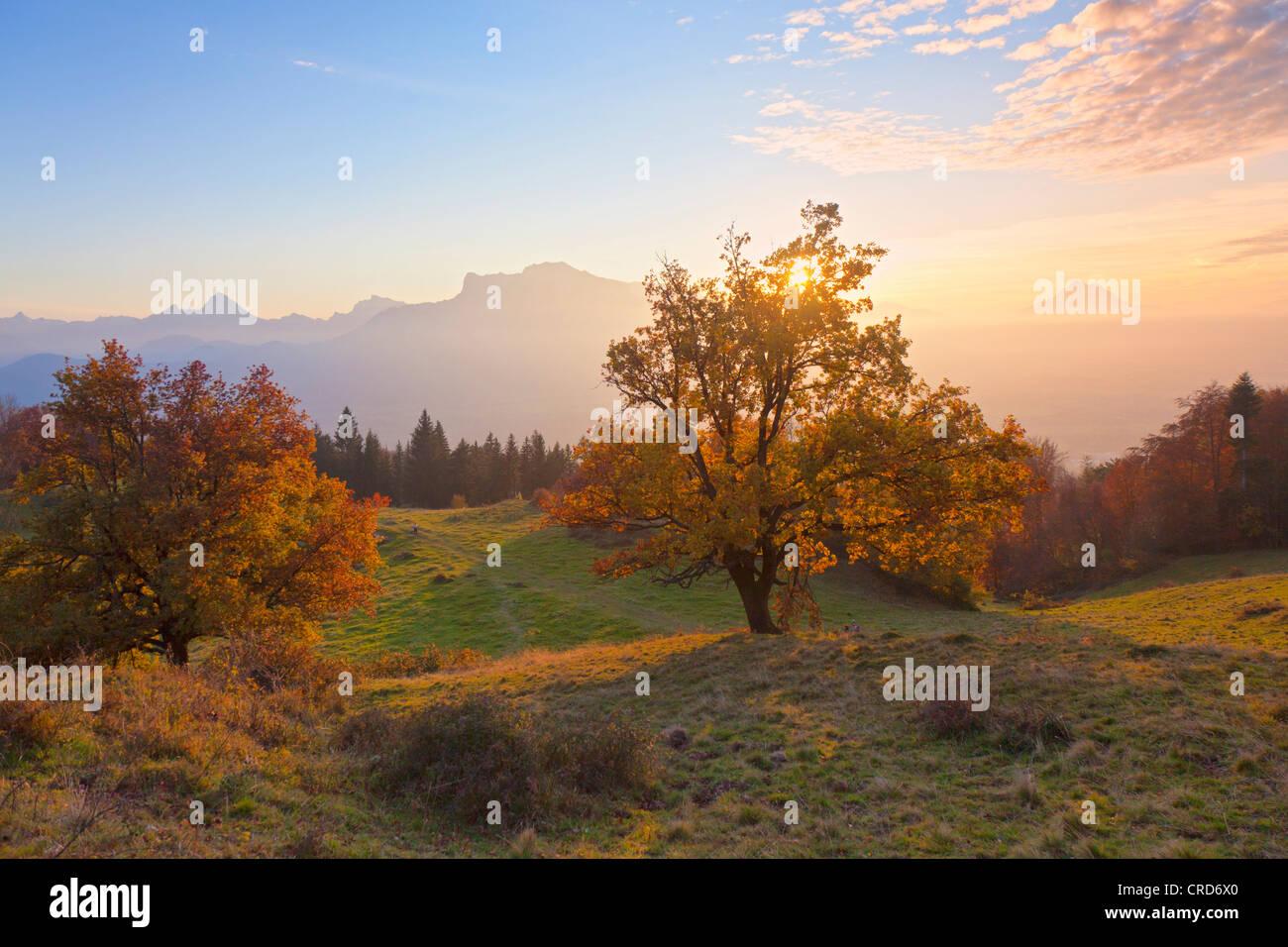 Salzachtal, Watzmann, Untersberg und steinernen Meer, Flachgau, Österreich, Europa Stockbild