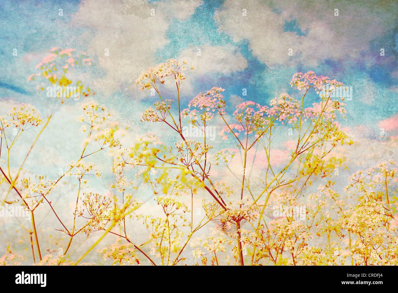 Weißen Wildblumen und blauer Himmel, künstlerische Grunge Hintergrund Stockbild