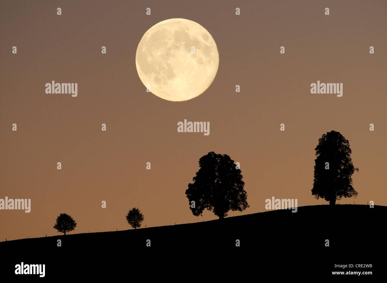 Silhouetten der Bäume vor dem Hintergrund der Vollmond, Hirzel, Schweiz, Europa Stockbild