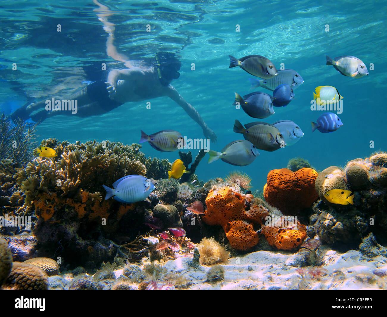 Mann unter Wasser Schnorcheln an einem bunten Korallenriff mit tropischen Fischen Stockbild