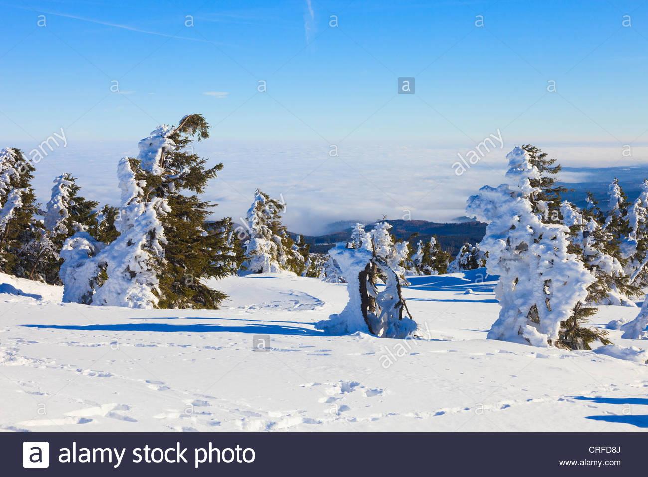 Schneebedeckte Bume oben auf dem Brocken Deutschland sah aus